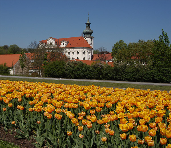 Prague Brevnov Monastery in spring time with tulips